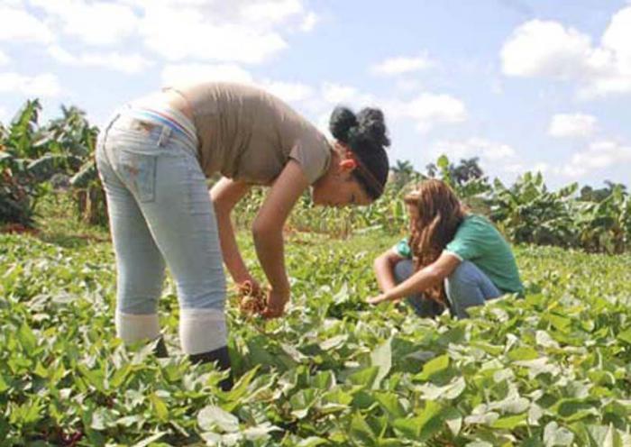 Reconocen en Camagüey aportes de las mujeres rurales al país