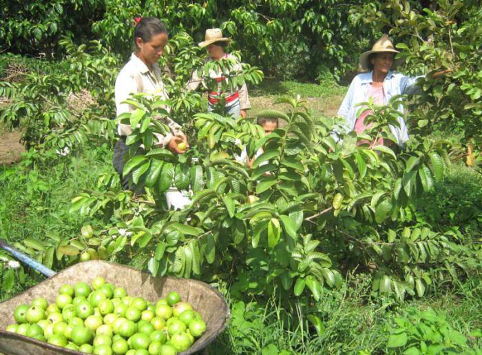 Trabajan por elevar protagonismo de la mujer en la agricultura.
