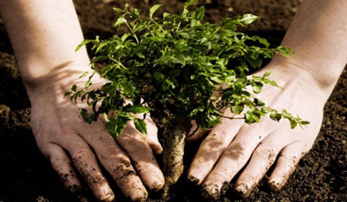 Cuba estimula la siembra de maderas preciosas