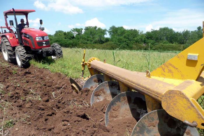 Acondicionan áreas destinadas a la siembra de caña de azúcar en Camagüey