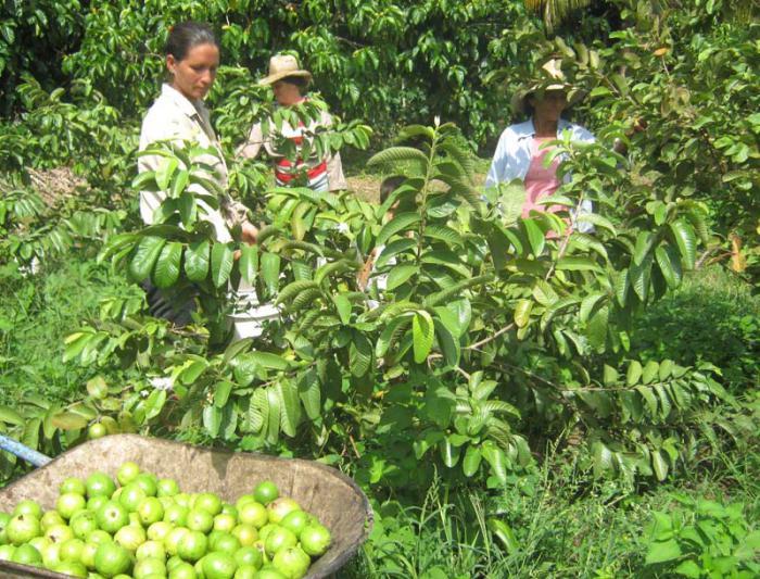 Campesina camagüeyana reconocida nacionalmente por resultados en Agroecología