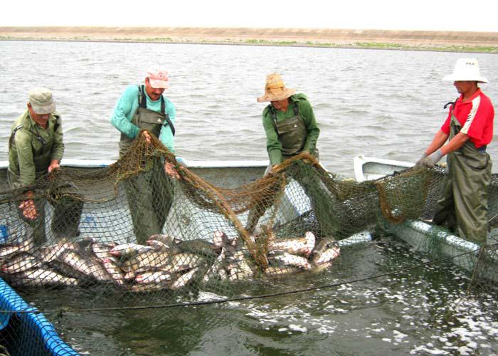 La FAO respalda proyecto para incrementar producción acuícola en Cuba