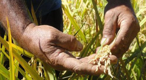 Bloqueo de Estados Unidos dificulta la producción de alimentos en Cuba