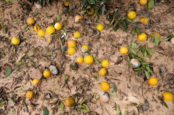 sustancias t xicas israel es contaminaron el suelo de gaza