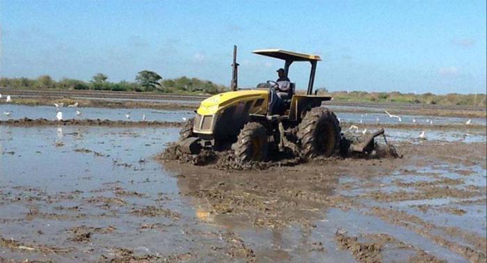 Nueva inyección por la eficiencia agrícola en el mayor polo arrocero del país