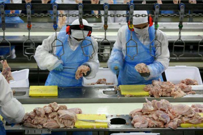 Produccion mecanizada de alimentos