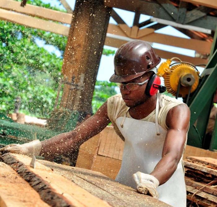 Actividad forestal reporta ingresos a la economía cubana