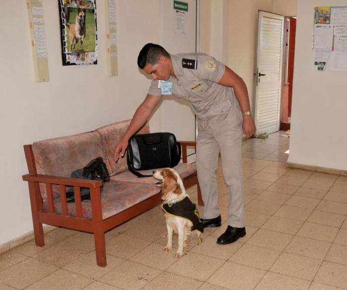 Técnica canina aduanera de Cuba.