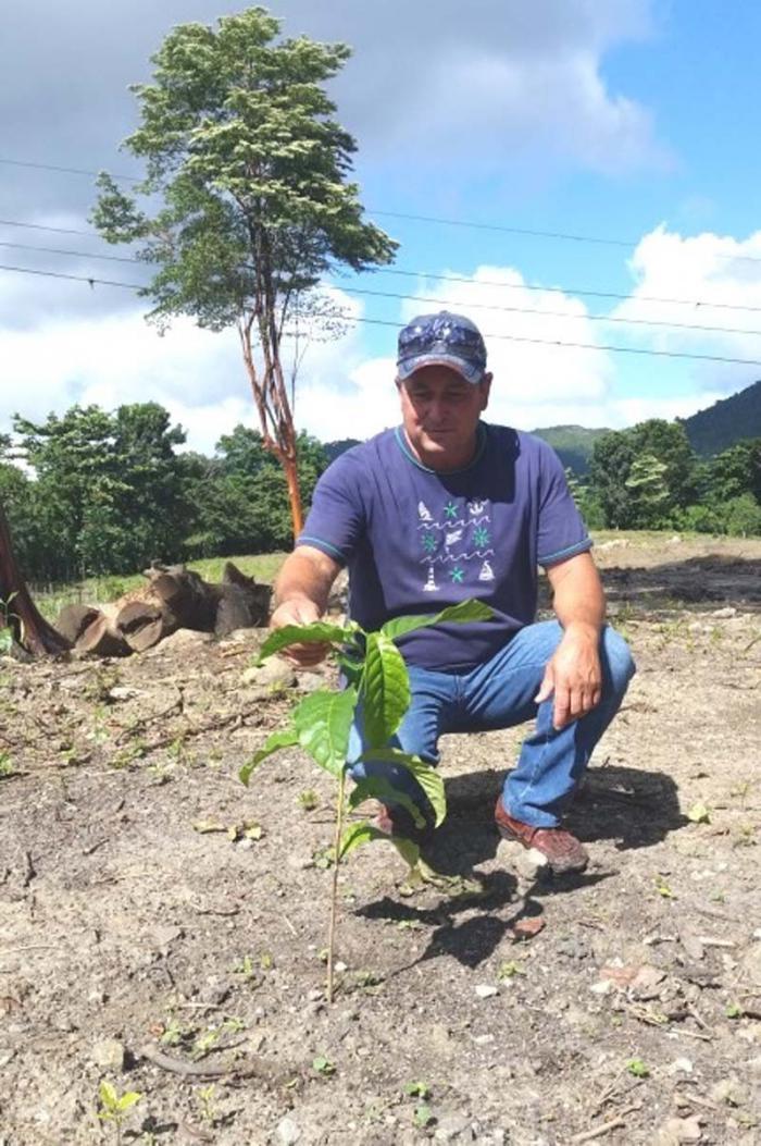 Guayac n de cuba extienden experiencia vietnamita en el - Caesalpinia gilliesii cultivo ...