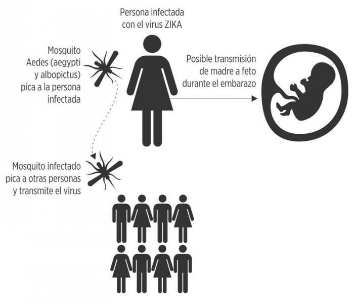 Zika Virus(simile al Dengue )in rapida espansione:allarme per le gravide(correlato a microcefalia nei neonati F0053169