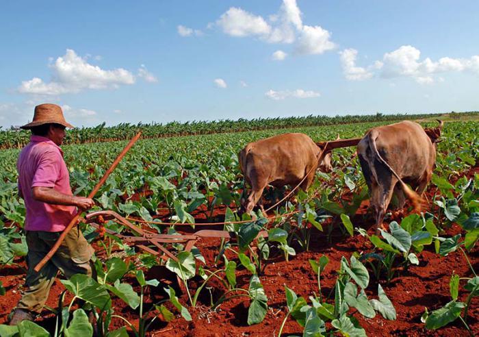 Prosperan en Camagüey áreas agrícolas entregadas en usufructo gratuito