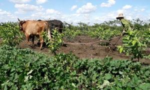 campesinos en Camagüey, aniversario 55 de la ANAP