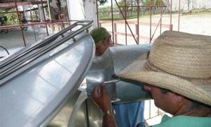 Crecimiento de producción lechera en Villa Clara