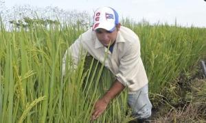 Orelvis, del servicio militar a la producción de alimentos