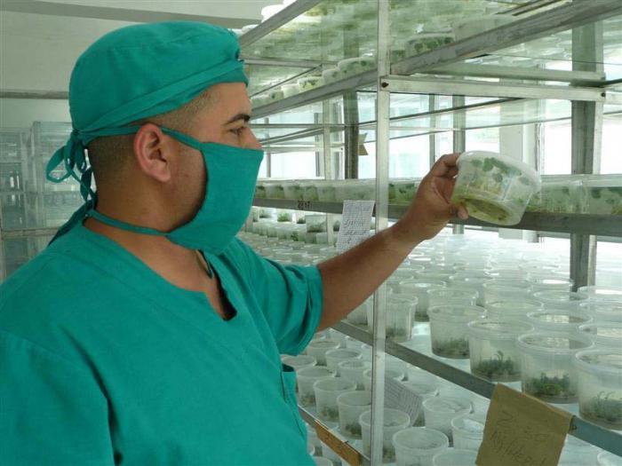 Cuba creates climate change resistant varieties of crops