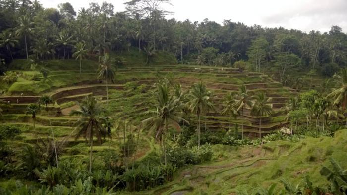 Imagen Terrazas Naturales En Bali Empleadas En Muchos