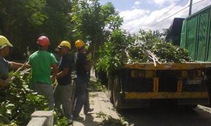 Obreros podan árboles como parte de los preparativos en Las Tunas ante amenaza del huracán Matthew