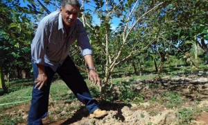 Para sembrar en muchos sitios de la península, hay que buscar el lugar adecuado entre las piedras y abrir el hueco con un pico, para poner la planta, explica Rolando.