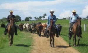La comunidad científica camagüeyana mantiene como prioridad el desarrollo ganadero de la provincia.