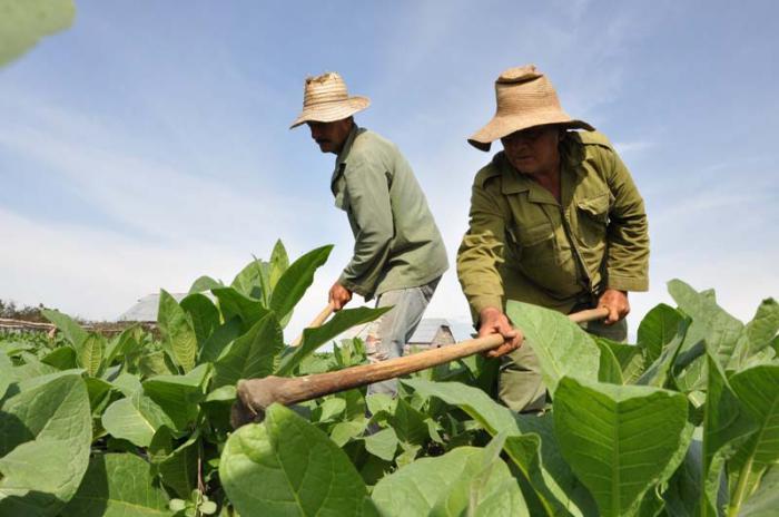 Llama presidente de la ANAP a pensar como país en el sector campesino granmense