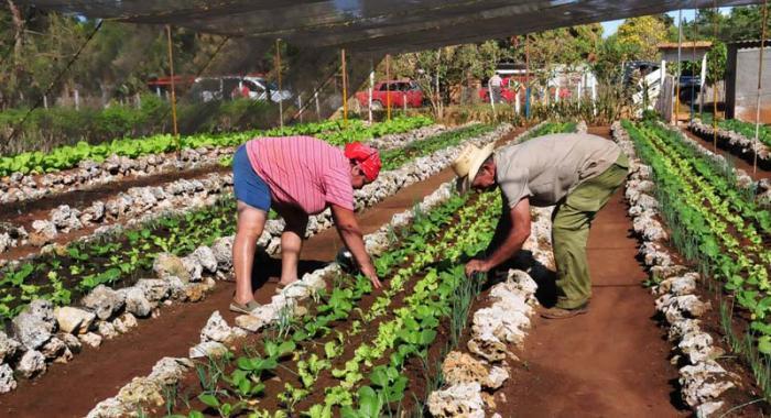 Reconocen avances de Camagüey en aplicación del Programa de la Agricultura Urbana