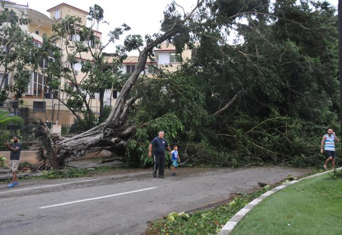 Arbol caido por el huracan Irma en la Calle G y 29 en el Vedado