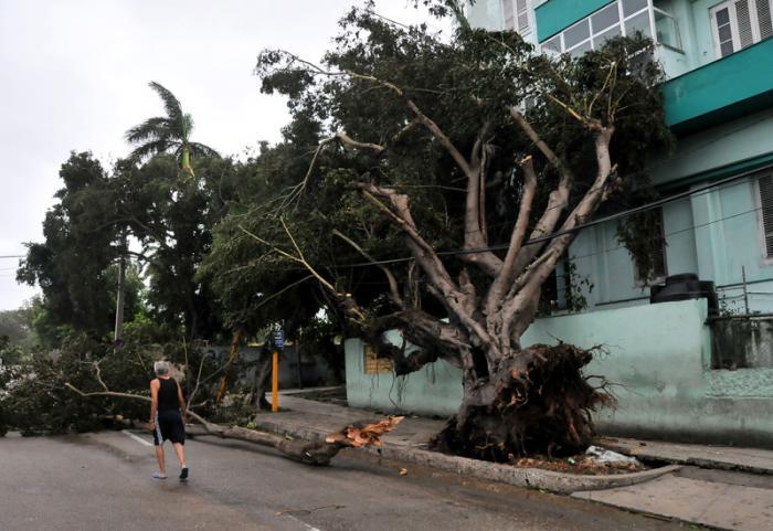Arbol caido por el huracan Irma en la Calle G y 27 en el Vedado