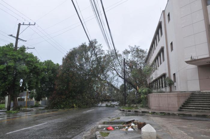 Huracán Irma en la capital. El domingo en la mañana mucha población en la calle y muchos turistas fotografiando las secuelas. Árbol caido en Ayestarán y 20 de mayo.
