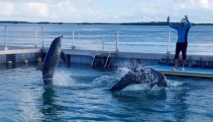 El delfinario de Jardines del Rey, en Cayo Guillermo, permite la interacción con los delfines.