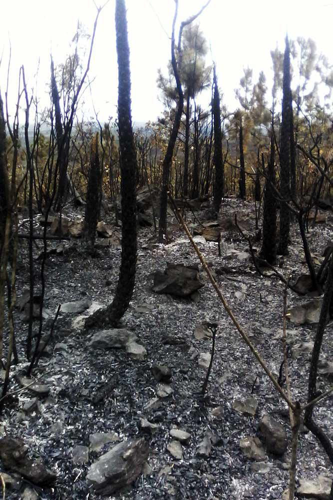 Dan por extinguido incendio forestal de grandes proporciones en Pinar del Río