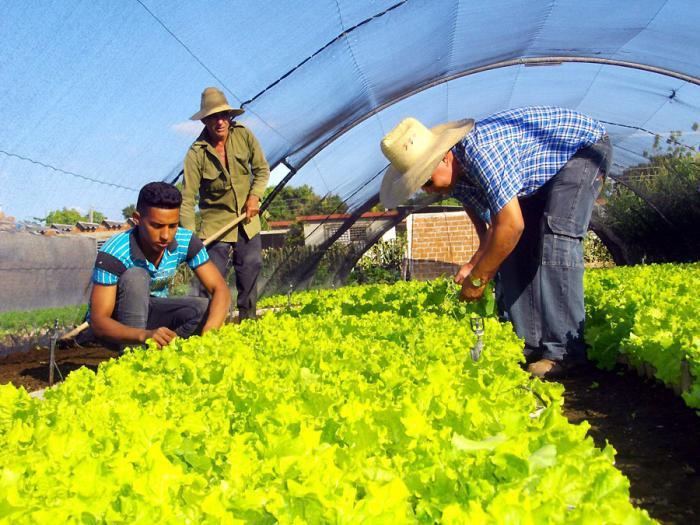 Agricultura urbana, suburbana y familiar: el reto de producir más alimentos