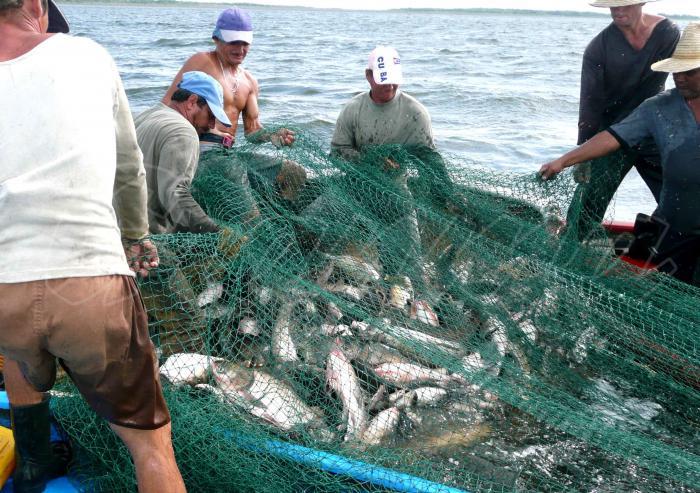 Granma se alista para entrada en vigor de la Ley de pesca