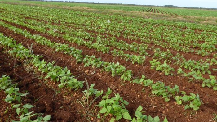 Incentivan a campesinos camagüeyanos a incrementar la producción de alimentos sobre bases agroecológicas