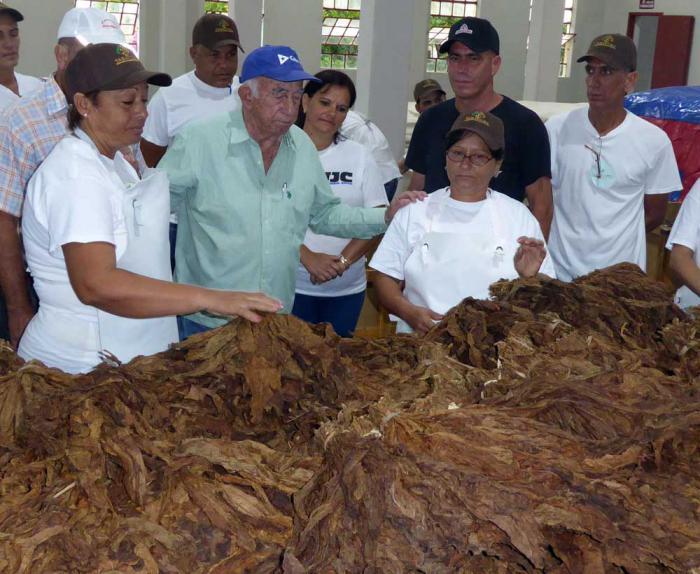 Pinar del Río tendrá al cierre del año ocho centros de procesamiento de tabaco en rama para la exportación