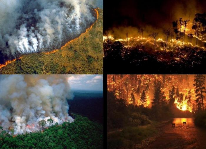 Crimen ambiental: arde la Amazonía brasileña