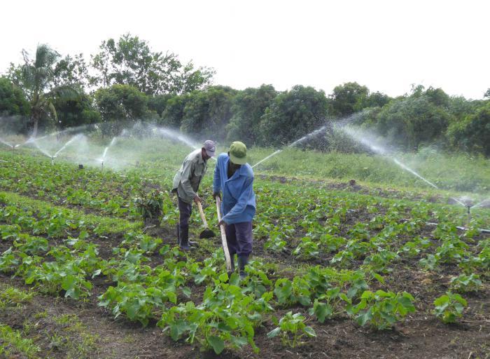 Analizarán en Mesa Redonda recientes medidas en la agricultura en Cuba