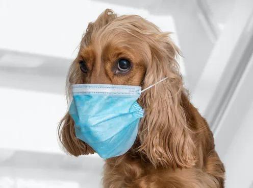 Alertan que perros y gatos domésticos pueden contraer el nuevo coronavirus