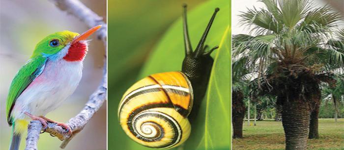 La implementación del Programa Nacional de Diversidad Biológica ha permitido avanzar en la gestión sostenible y restauración de ecosistemas, y se han incrementado las acciones de prevención y enfrentamiento a las ilegalidades que afectan tal diversidad biológica, aseveró la Ministra del Citma.