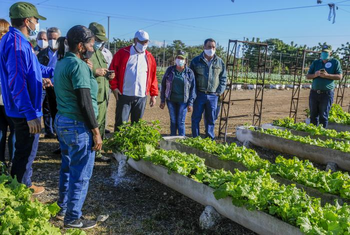 Raúl y Díaz-Canel reconocen aportes del Programa de la Agricultura Urbana, Suburbana y Familiar