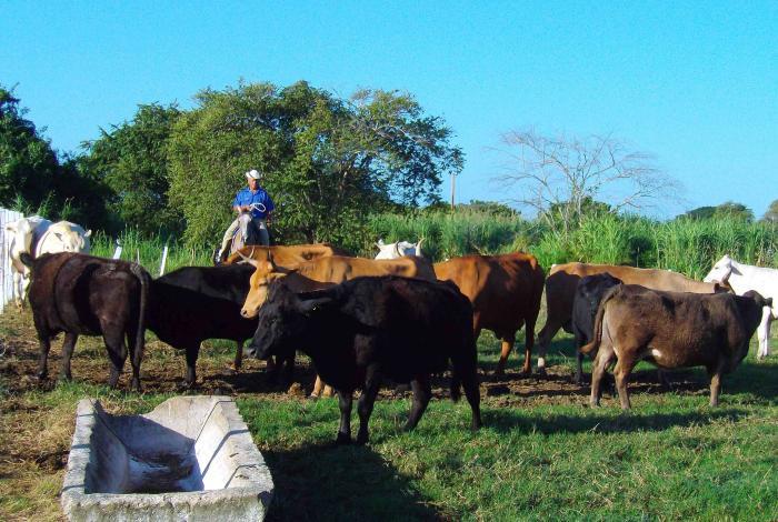 Analizan implementación de medidas para dinamizar el sector agropecuario en Cuba