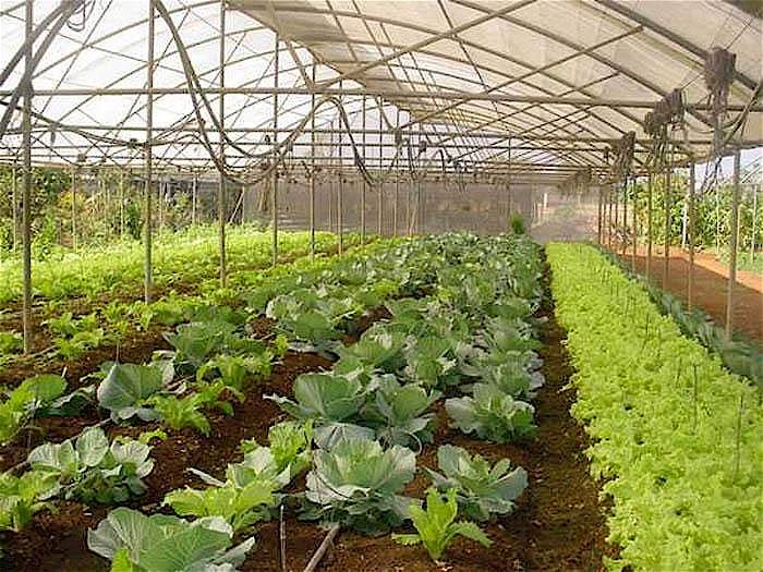Nachhaltige Landwirtschaft in Kuba